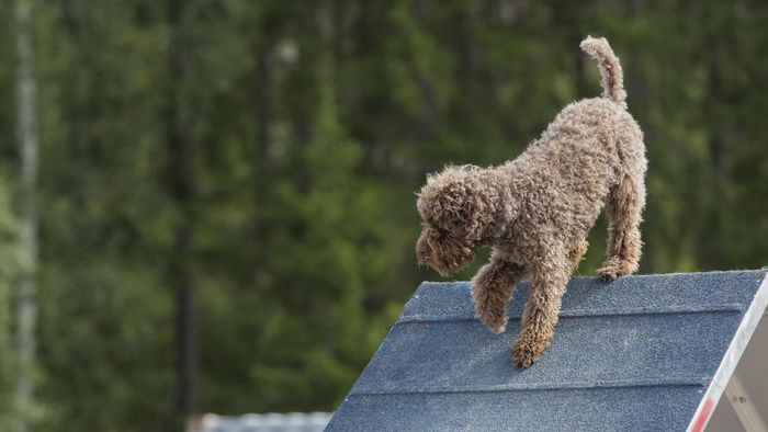 What Are Some Good Dog Ramps?