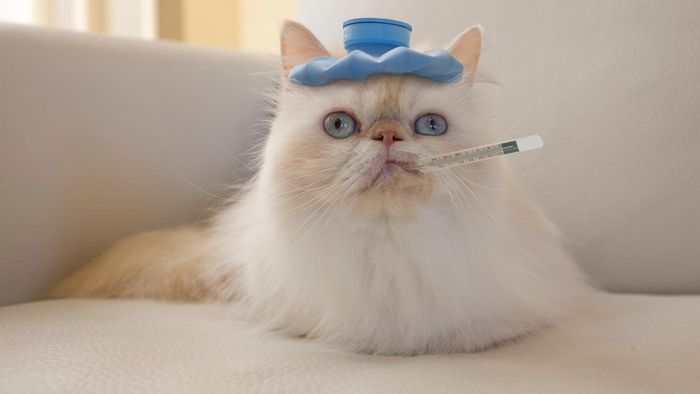 What Are Some Common Symptoms of Ill Health in Cats?