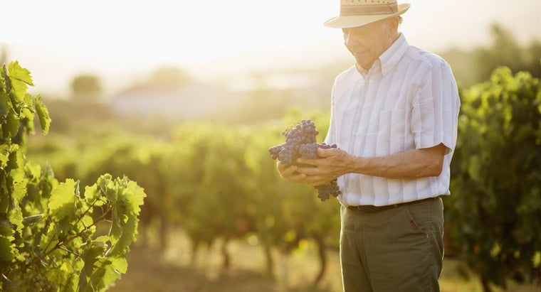 When Should You Prune Grapevines?