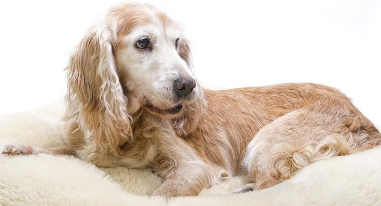 What Are Some Arthritis Remedies for Dogs?