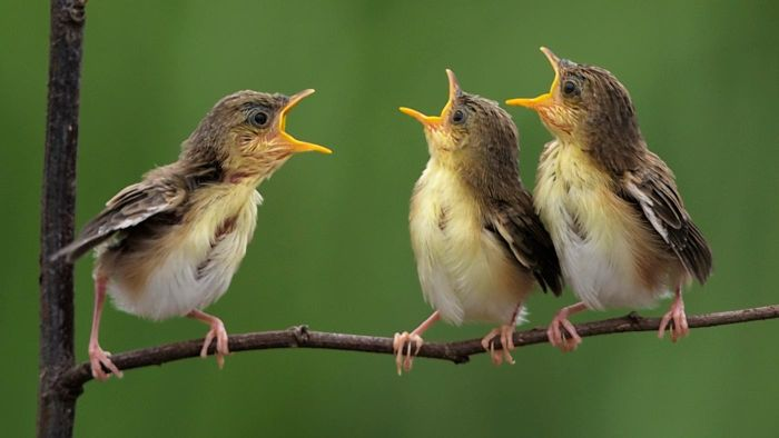 How Can You Learn How to Listen to Bird Calls Properly?