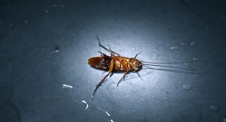 What Home Remedy for Roaches Actually Works?
