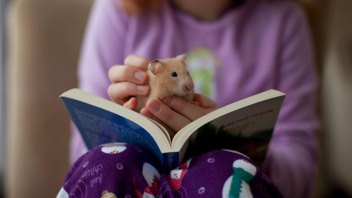 What Are Some Tips for Caring for a Pet Hamster?