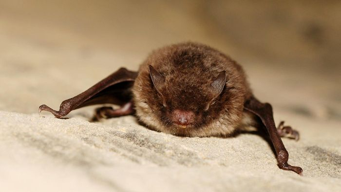 What Do Bats Eat?