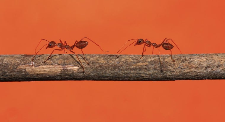 How Do You Get Rid of Ants Naturally?