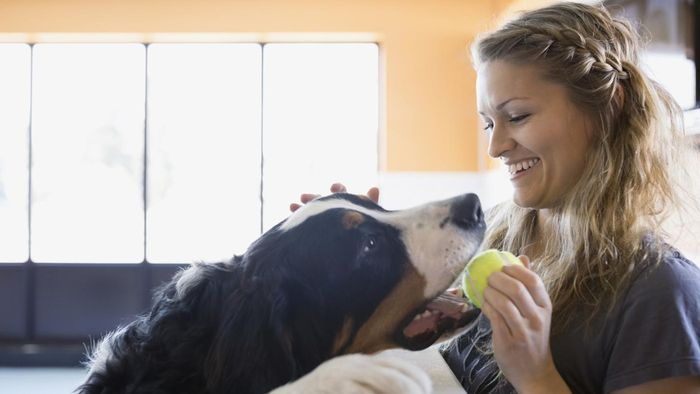 What Are Some Important Things First-Time Dog Owners Should Know?