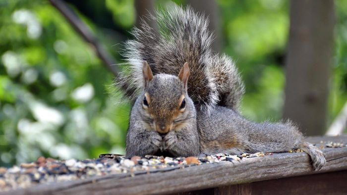 How Can You Build a Squirrel Feeder?