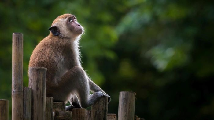 Who Sells Pet Monkeys?