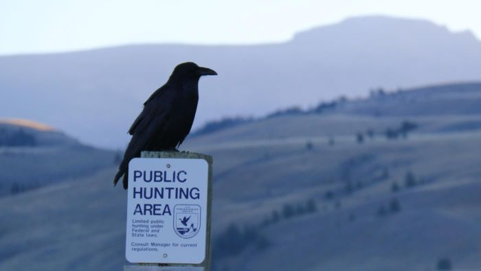 """Is an Original Copy of the Poem """"The Raven"""" Available for Sale?"""