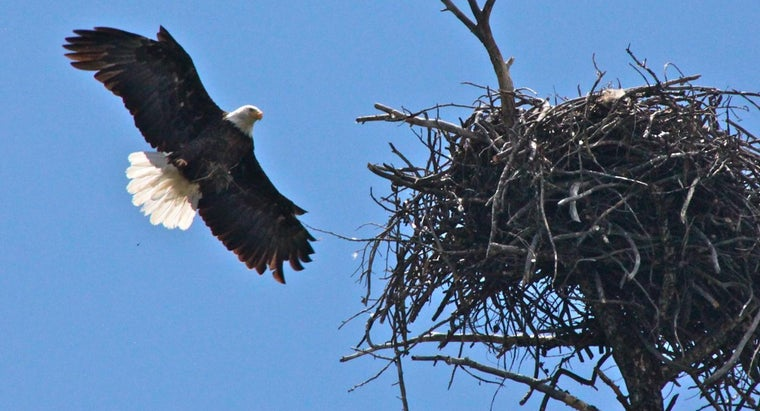 Is There an Eagle Nest Cam in Iowa?