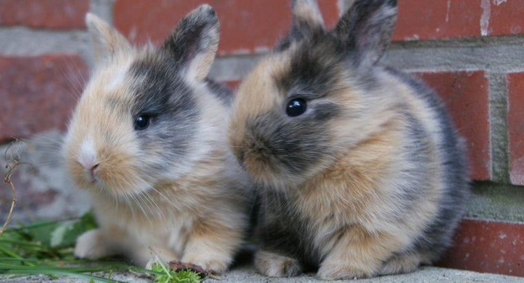 What Are Some Pet Names for Bunnies?