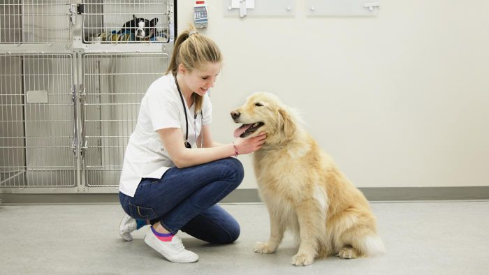 What Are Some Schools That Offer Courses to Become a Veterinary Technician?