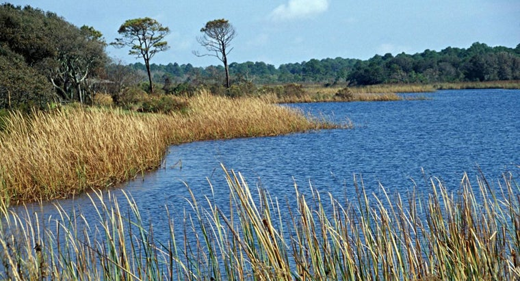 What Are Some Facts About Gulf State Park in Gulf Shores, Alabama?