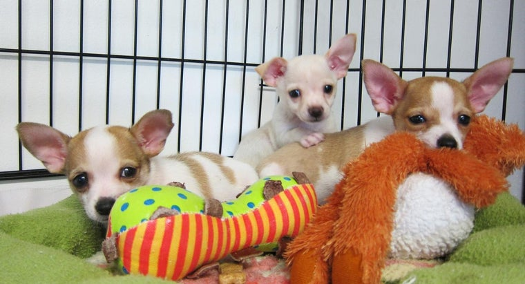 What Are the Requirements for Adopting Puppies From Animal Shelters?