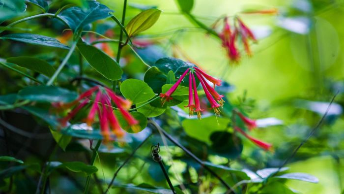 What Plants Are Good for Landscaping in Florida?