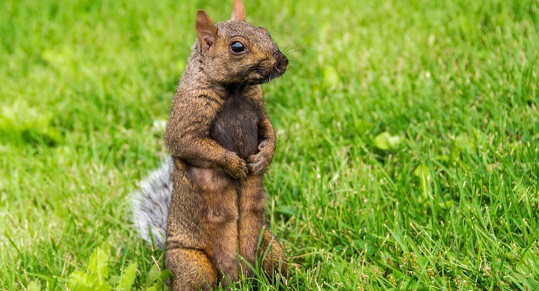 What Is a Squirrel Skinning Tool?