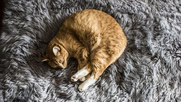 Is There an Online Symptom Checker for Cats?