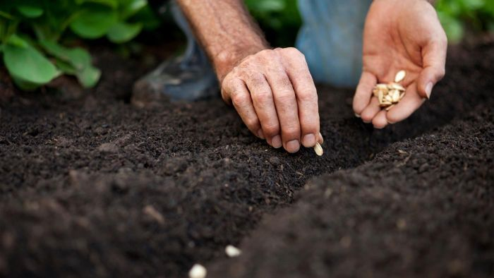 What Is the Best Time of Year to Plant Vegetables?