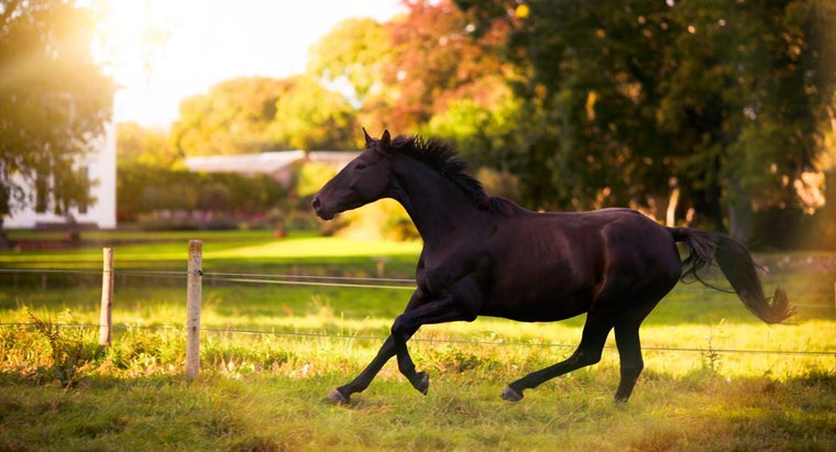 How Do You Learn About Horse Breeding?