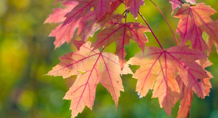 Where Can You Find a Map of Peak Viewing Spots for Fall Leaves?