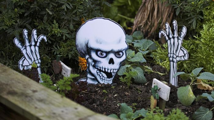 Where Can You Find Halloween Skeleton Pictures for Free?