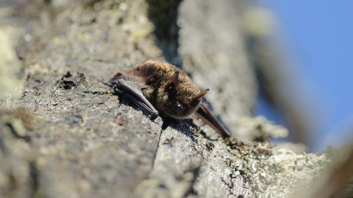 What Are Some Basic Facts About Little Brown Bats?