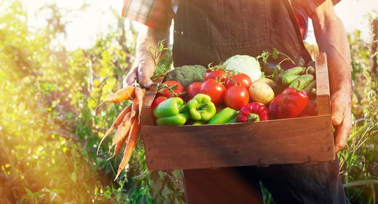 What Are Some Popular Fresh Vegetables?