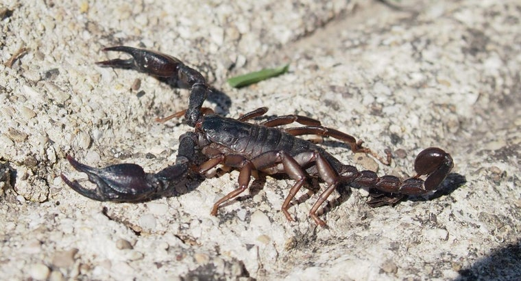 What Is the Treatment for a Scorpion Bite?
