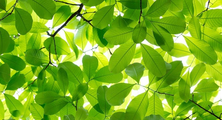 Can Trees Be Identified by the Shape of Their Leaves?