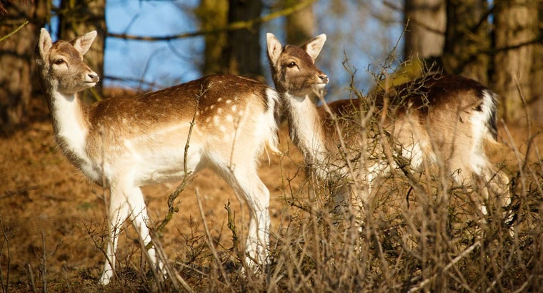 Where Can You Find Images of Deer?