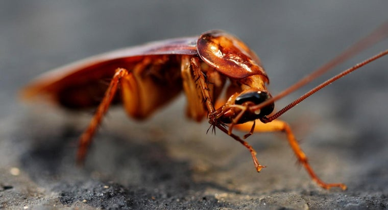 Do Roaches Feel Pain If You Kill Them Naturally?