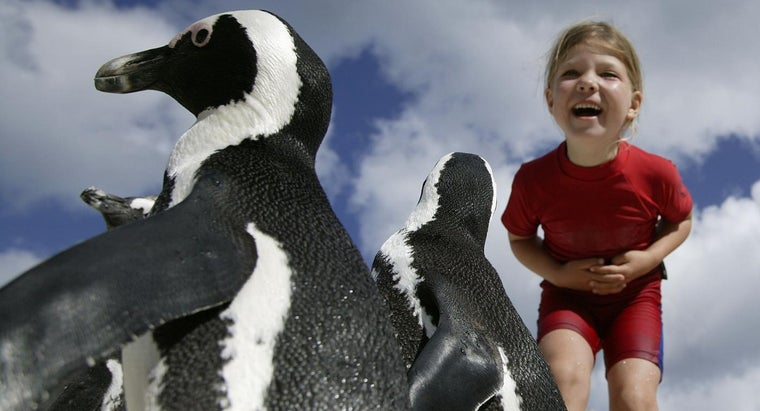 What Are Some Good Penguin Games for Kids?