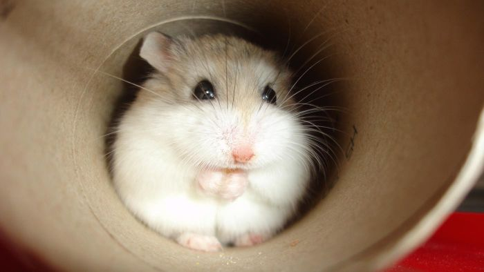 What Are Some Good Names for Pet Hamsters?