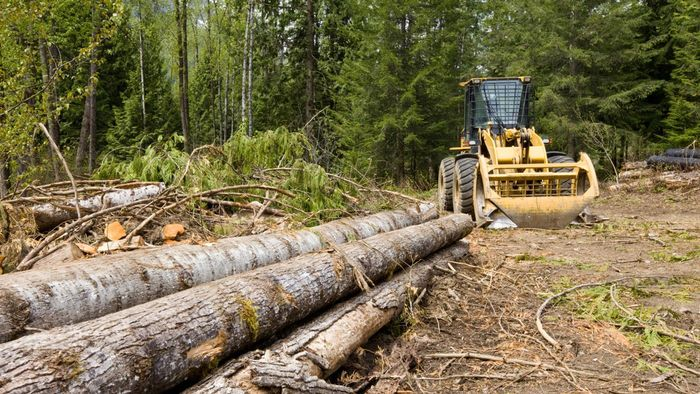 Where Can You Find Skidders Logging Equipment?