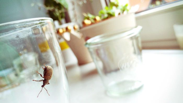 How can you get rid of insects and pests in the home?