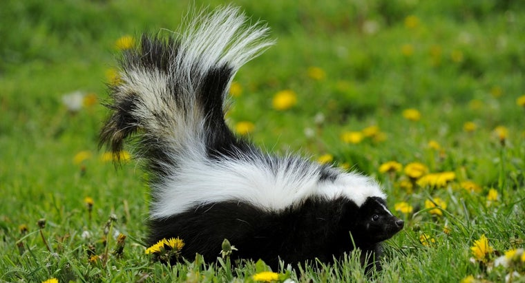 What Is a Good Skunk Repellent?