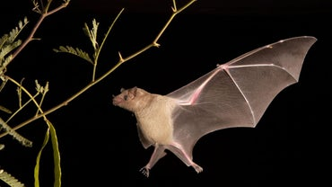 How Do You Get Rid of Bats?