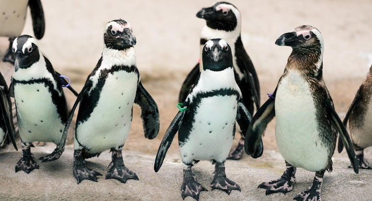 Where Do You Find Facts About Penguins?