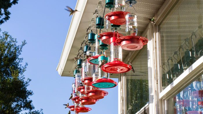 How Do You Keep Bees Away From a Hummingbird Feeder?