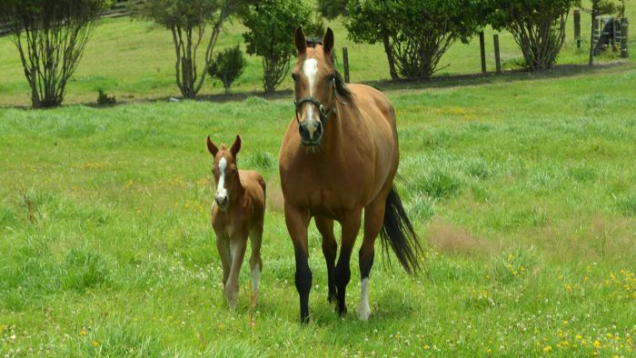 What Should You Know Before Breeding a Horse?