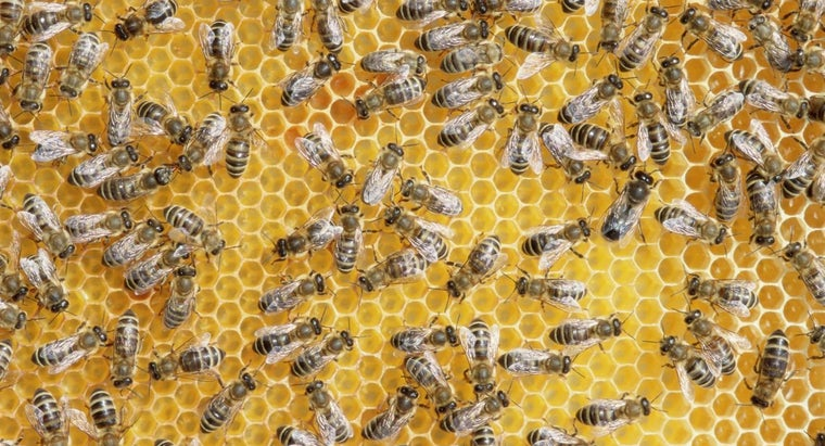 Where Can You Get Facts About Honey Bees?