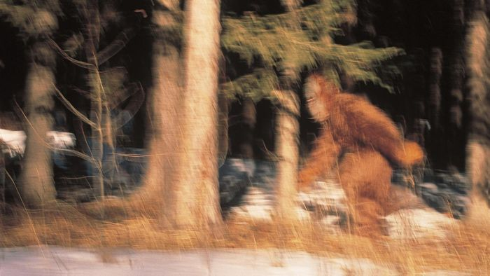 Does Film Footage Exist of Bigfoot?