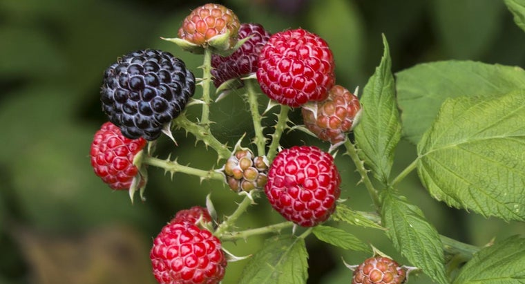 What Are Some Ways to Identify Berry Plants?