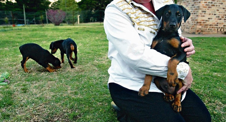 How Can You Find Reputable Puppy Breeders?