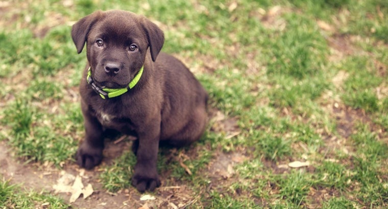 What Are Some Cool Puppy Names?