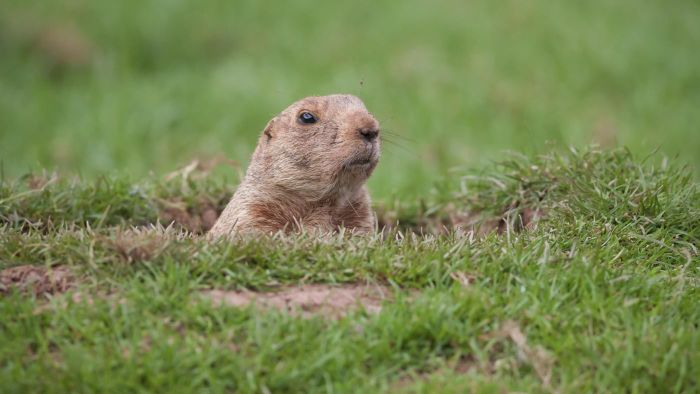When Is Groundhog Day?