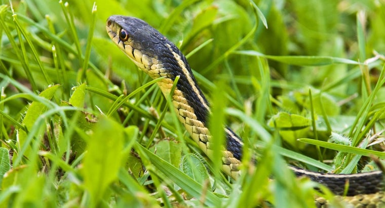 How Do You Trap a Snake Humanely?