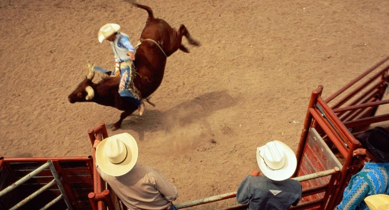 How Do You Find the Winners of the American Rodeo?