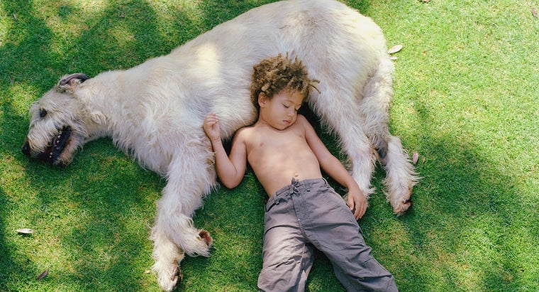 What Items Do You Need to Raise an Irish Wolfhound?