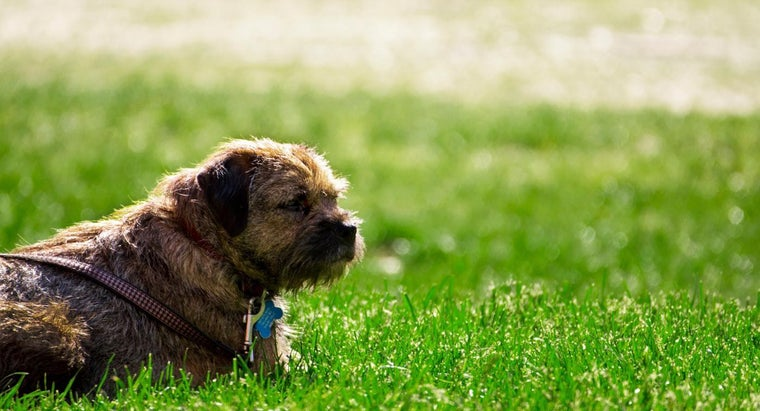 What Vaccinations Are Recommended for Dogs?